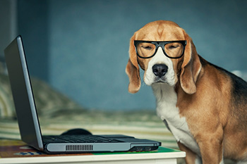 This dog is appalled at an unprofessional email he just received.